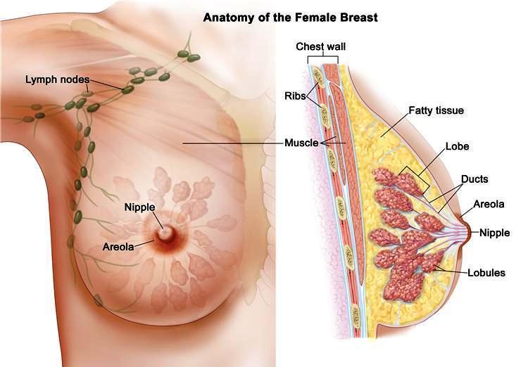 breast enlargment treatment anatomy problem treatment specialsit in chennai tamil nadu