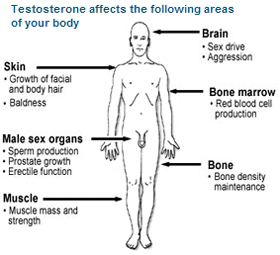 male sex hormone androgen testeosteron low treatment in chennai tamil nadu